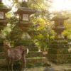 神社が意味であふれかえる!神社検定公式テキスト『神社のいろは』を読む